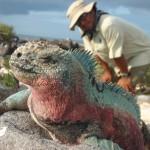 iguana in galapagos