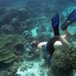 komodo snorkeler