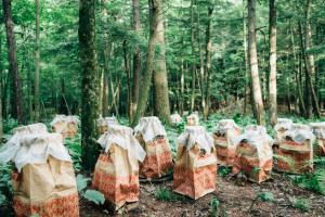 shiitake mushroom camp